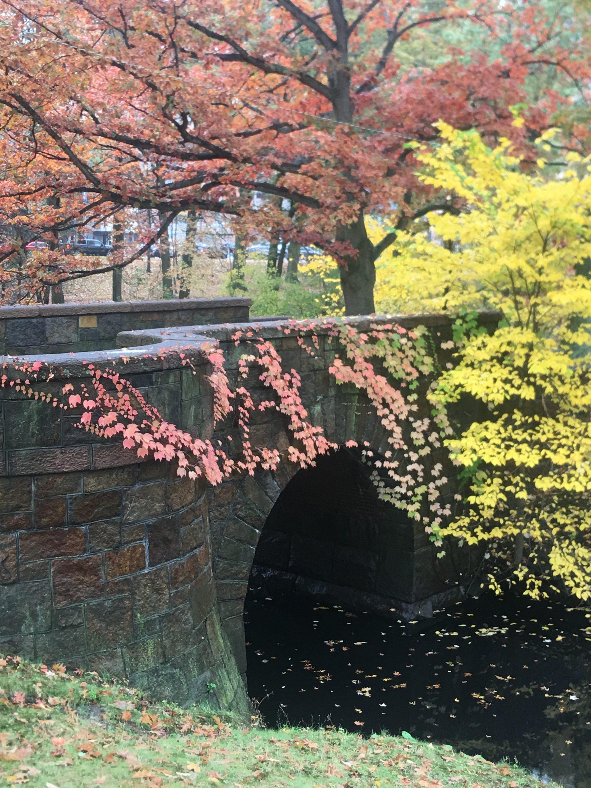 Autumn scene, Boston